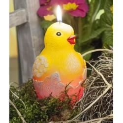 Kurczak z diodą